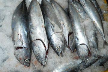 Cắt cá đông lạnh chưa đầy 5s, bạn đã biết cách?