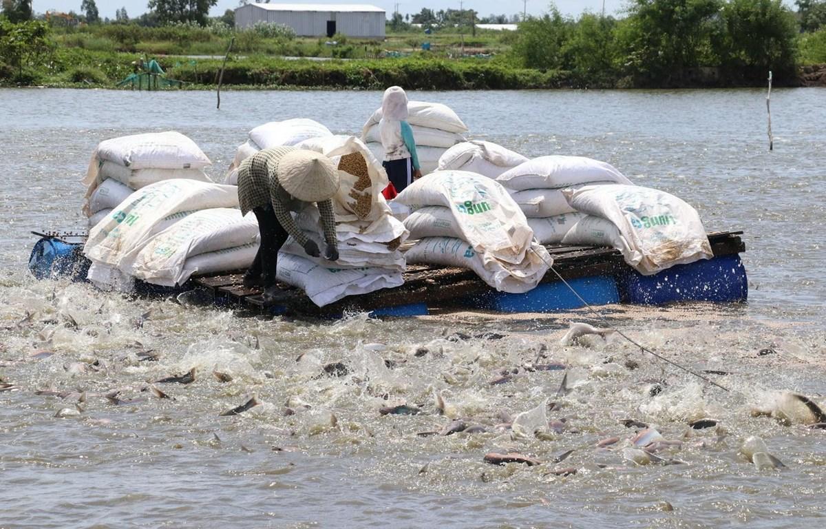 sản xuất dầu cá